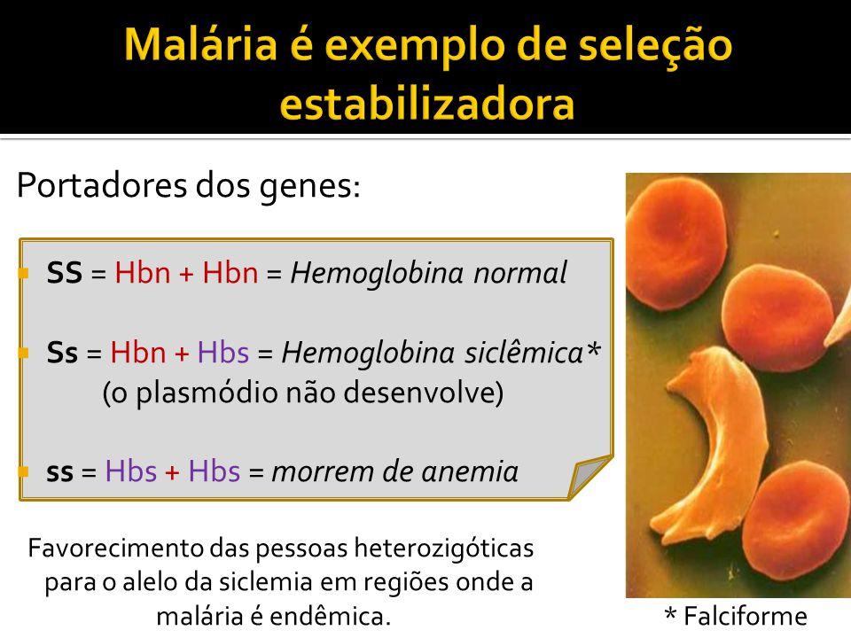 Malária é exemplo de seleção estabilizadora