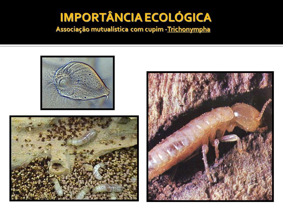 Associação mutualística com cupim -Trichonympha