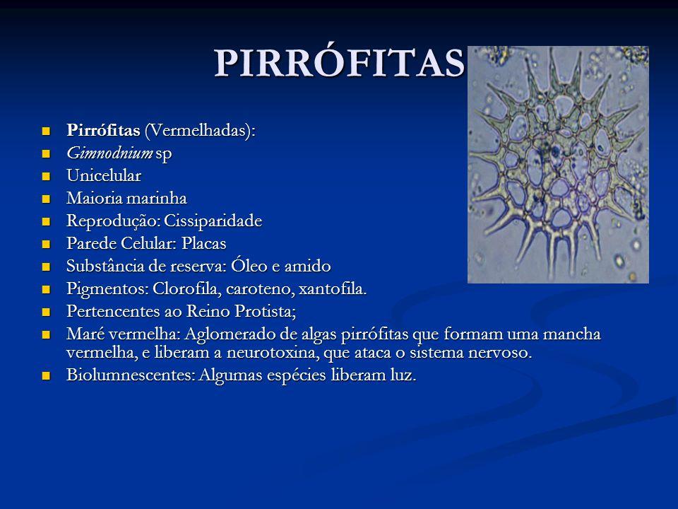 PIRRÓFITAS Pirrófitas (Vermelhadas): Gimnodnium sp Unicelular
