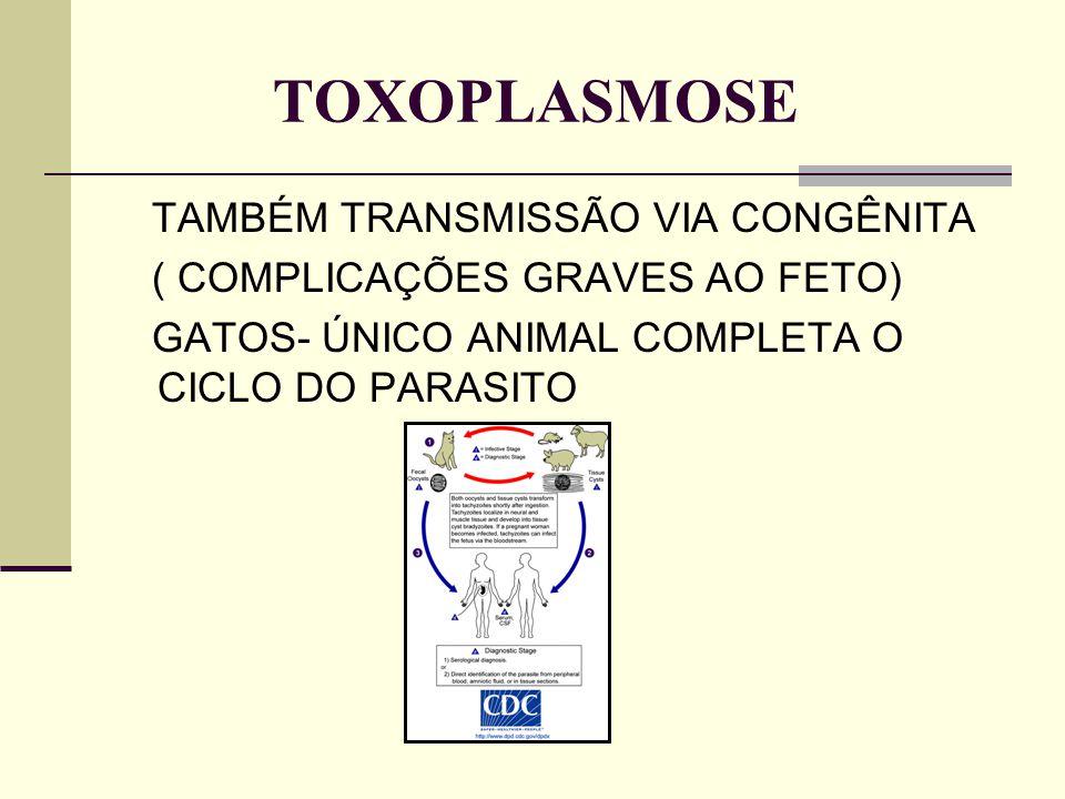 TOXOPLASMOSE TAMBÉM TRANSMISSÃO VIA CONGÊNITA