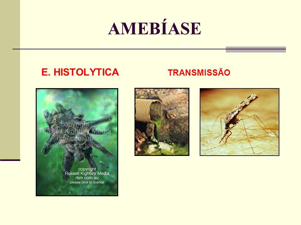 AMEBÍASE E. HISTOLYTICA TRANSMISSÃO