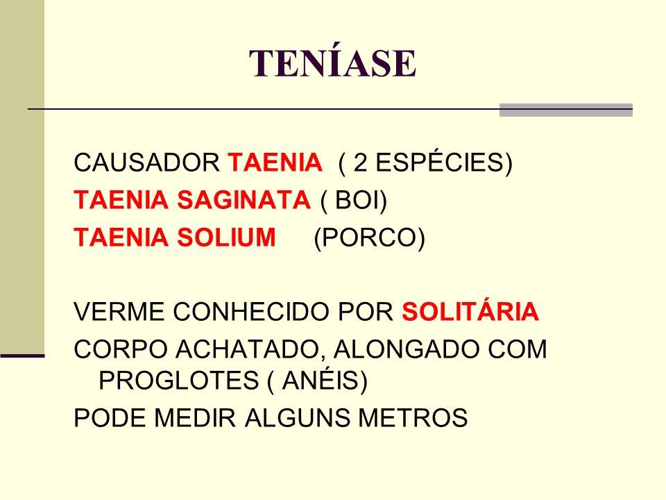 TENÍASE CAUSADOR TAENIA ( 2 ESPÉCIES) TAENIA SAGINATA ( BOI)