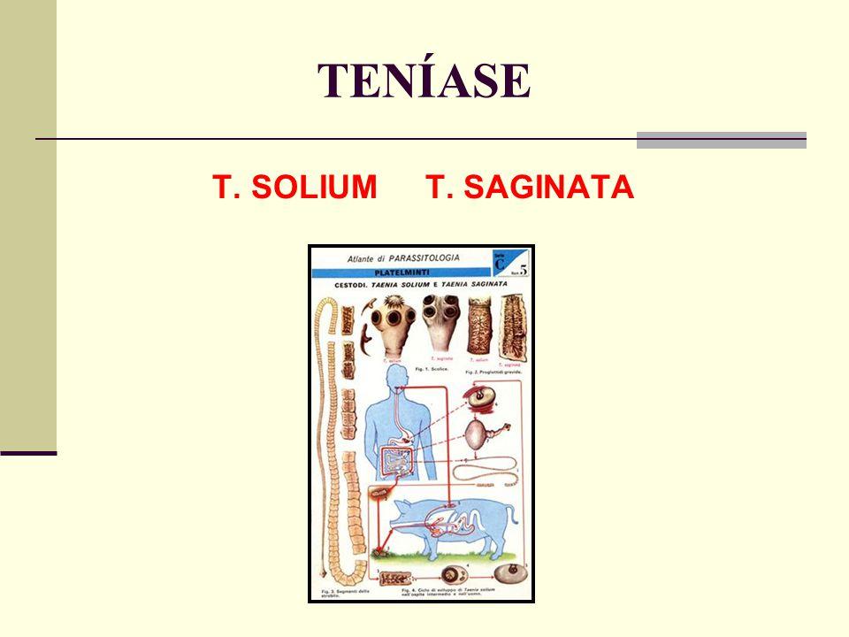 TENÍASE T. SOLIUM T. SAGINATA