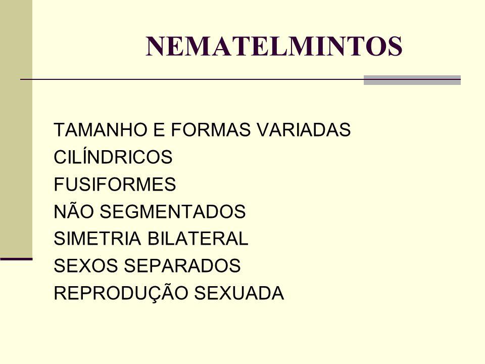 NEMATELMINTOS TAMANHO E FORMAS VARIADAS CILÍNDRICOS FUSIFORMES