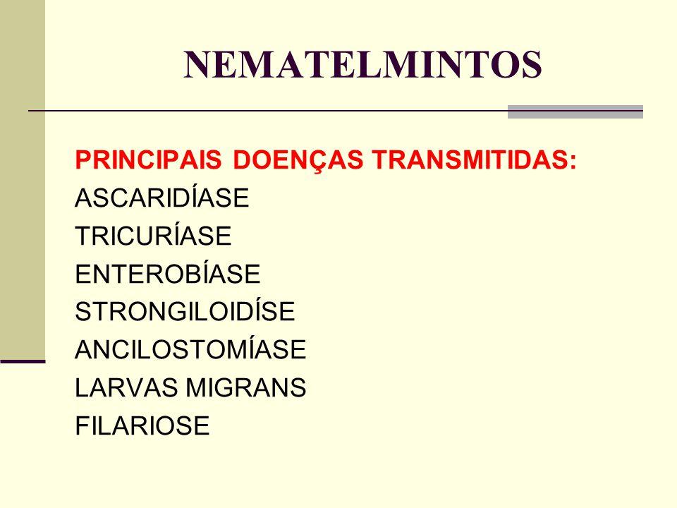 NEMATELMINTOS PRINCIPAIS DOENÇAS TRANSMITIDAS: ASCARIDÍASE TRICURÍASE