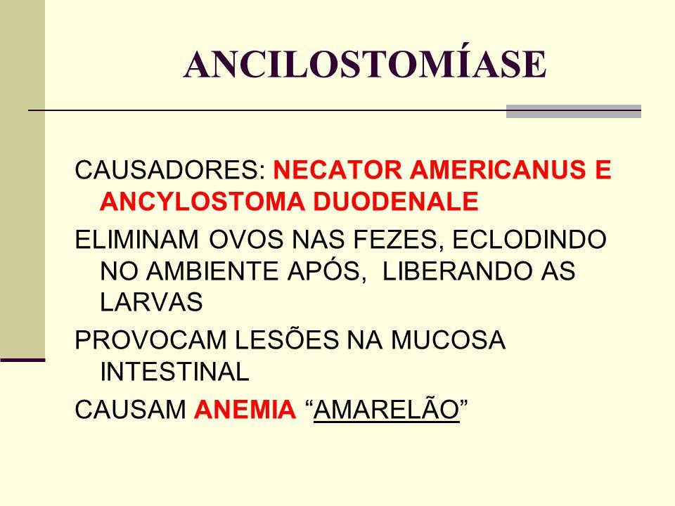 ANCILOSTOMÍASE CAUSADORES: NECATOR AMERICANUS E ANCYLOSTOMA DUODENALE