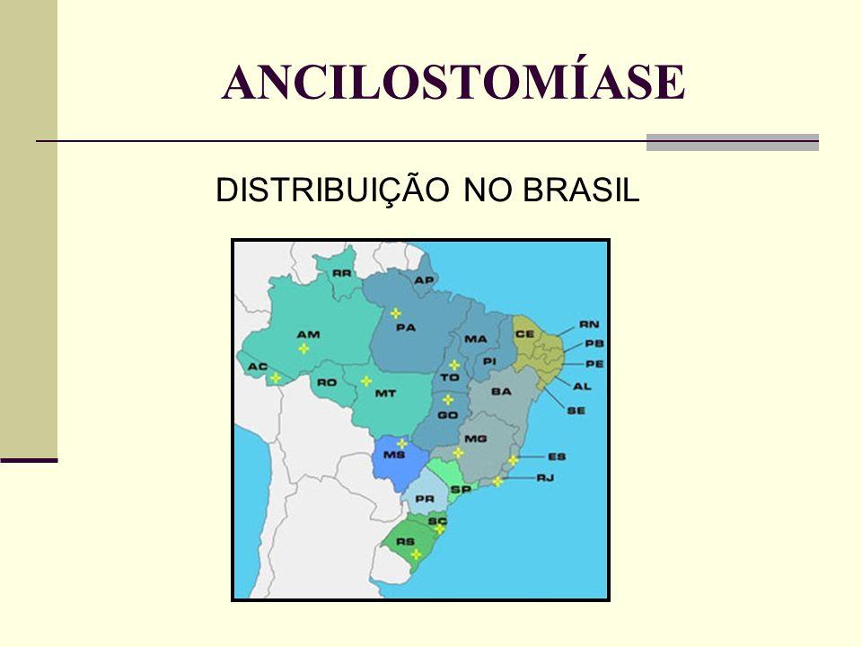ANCILOSTOMÍASE DISTRIBUIÇÃO NO BRASIL