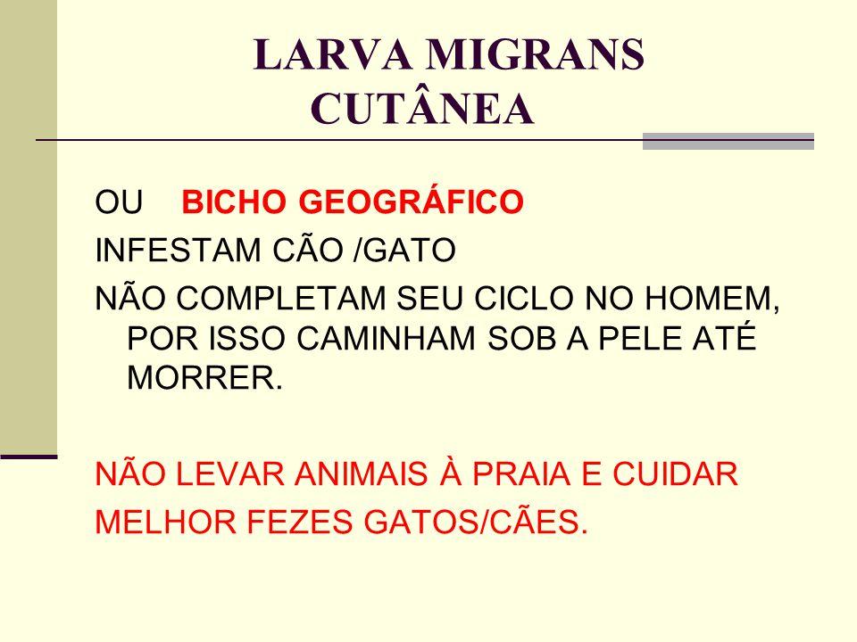 LARVA MIGRANS CUTÂNEA OU BICHO GEOGRÁFICO INFESTAM CÃO /GATO