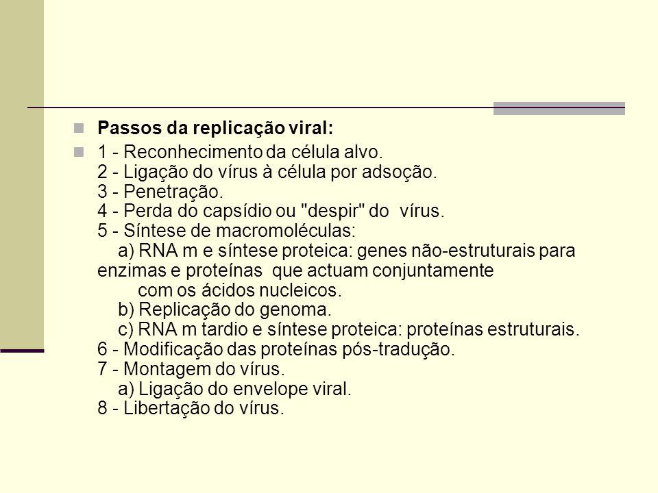 Passos da replicação viral: