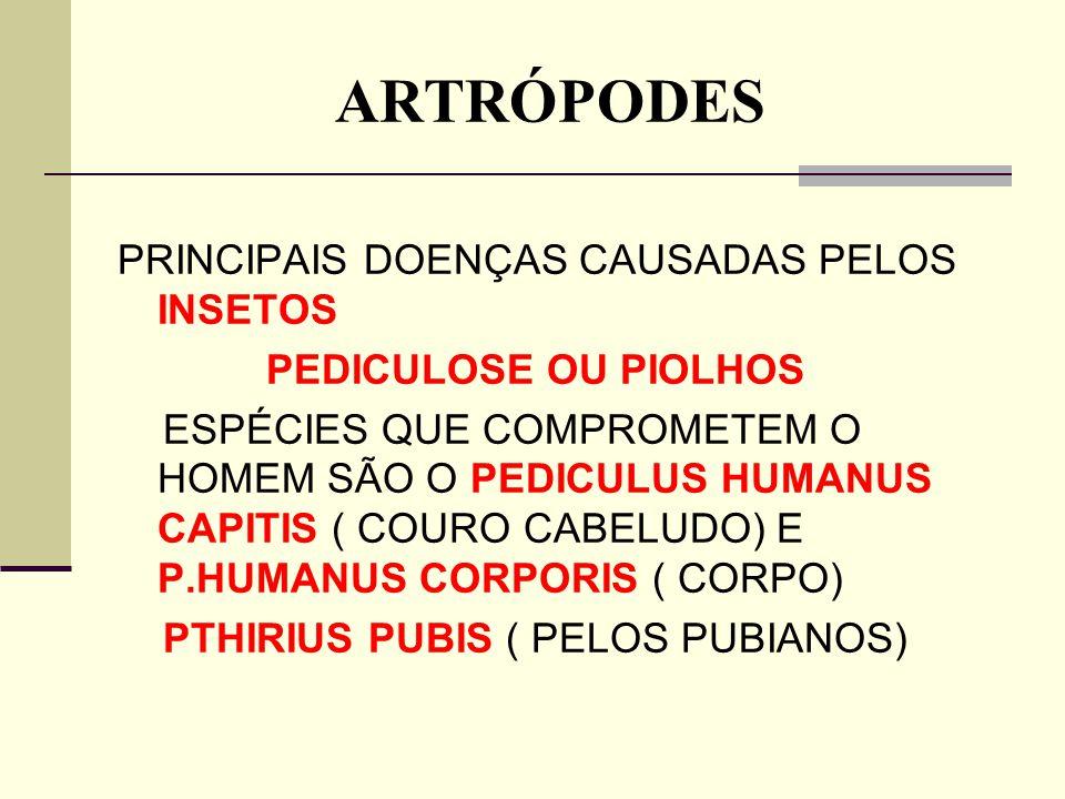 ARTRÓPODES PRINCIPAIS DOENÇAS CAUSADAS PELOS INSETOS