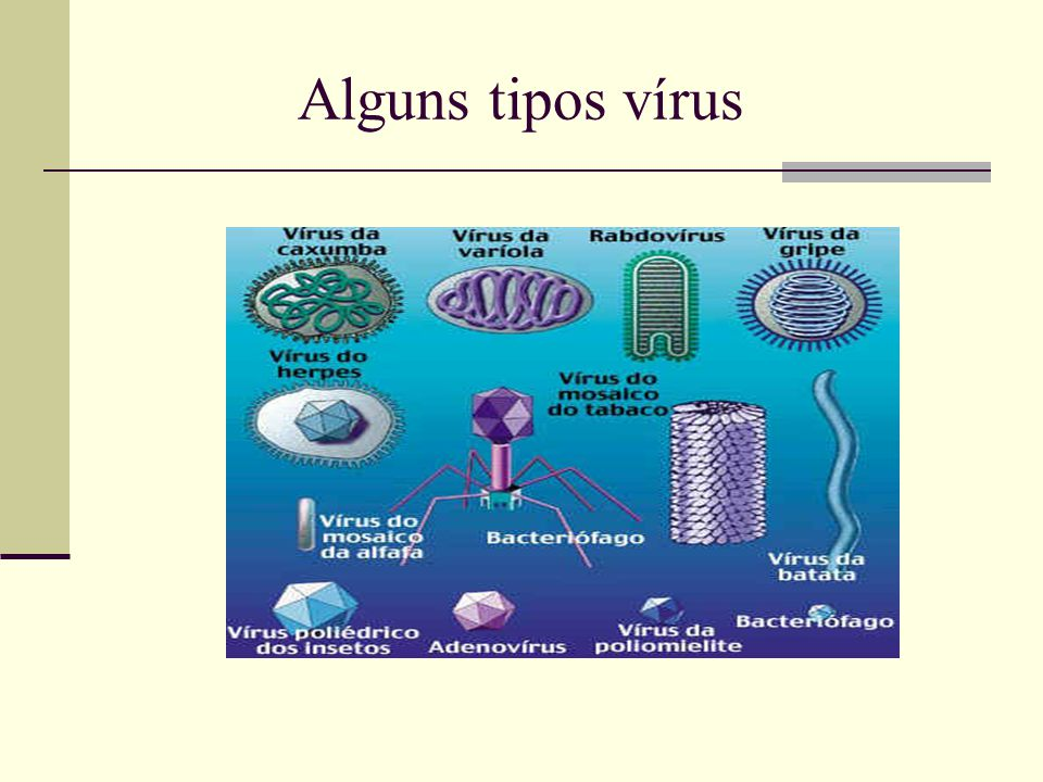 Alguns tipos vírus