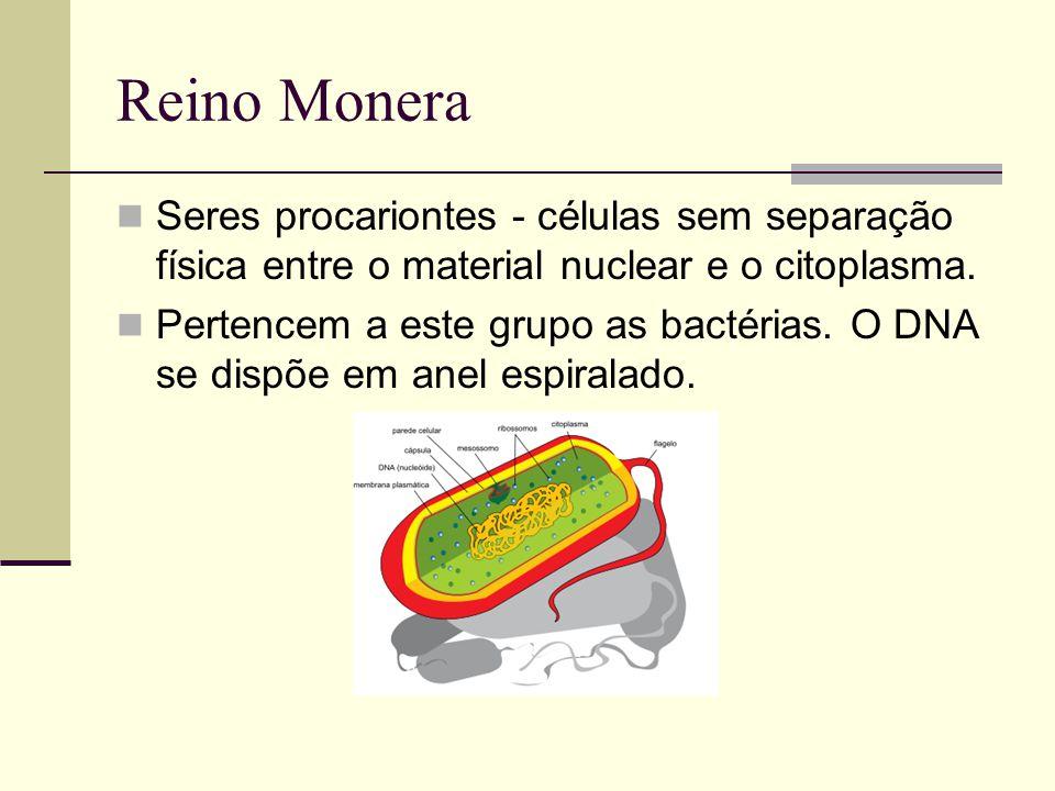 Reino Monera Seres procariontes - células sem separação física entre o material nuclear e o citoplasma.