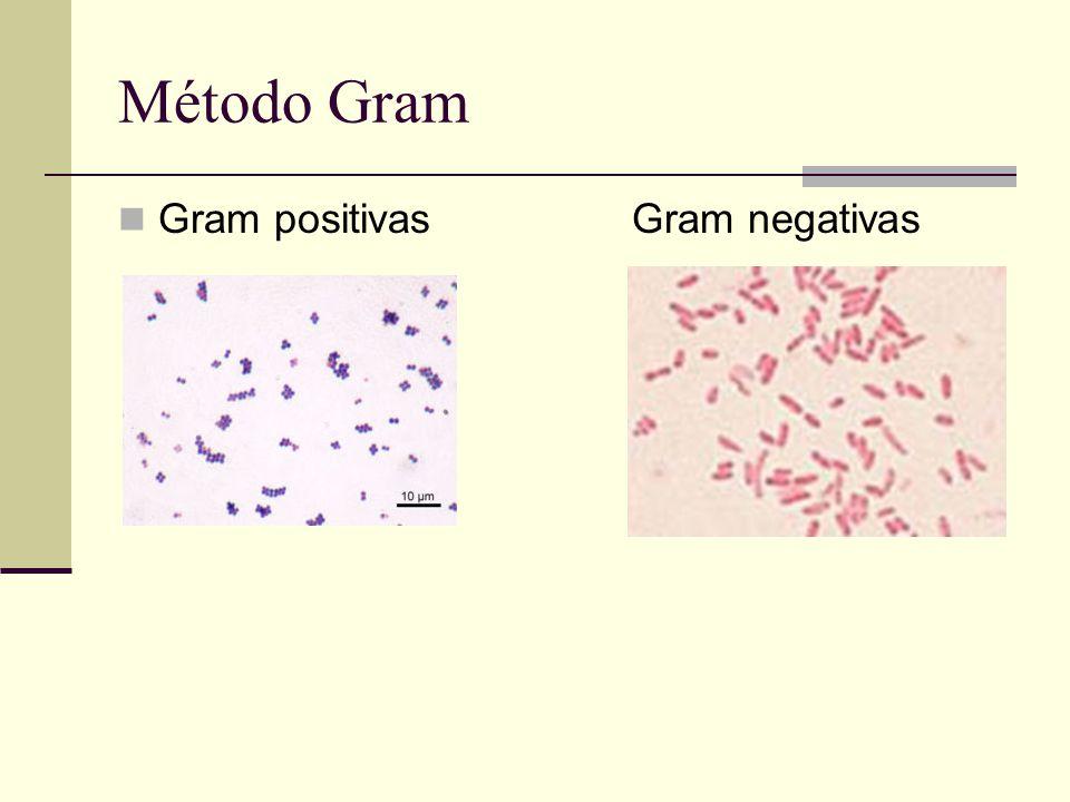 Método Gram Gram positivas Gram negativas