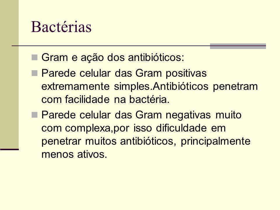Bactérias Gram e ação dos antibióticos: