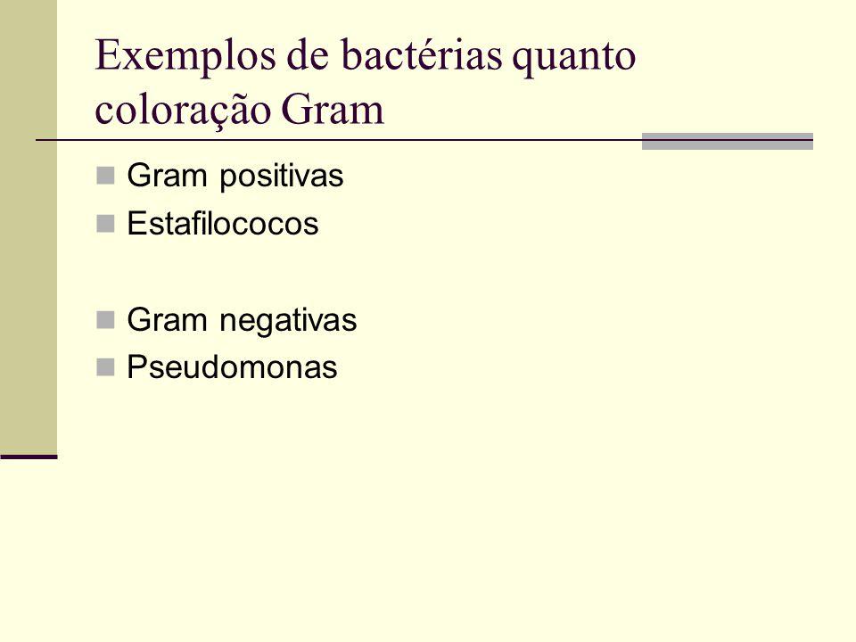 Exemplos de bactérias quanto coloração Gram