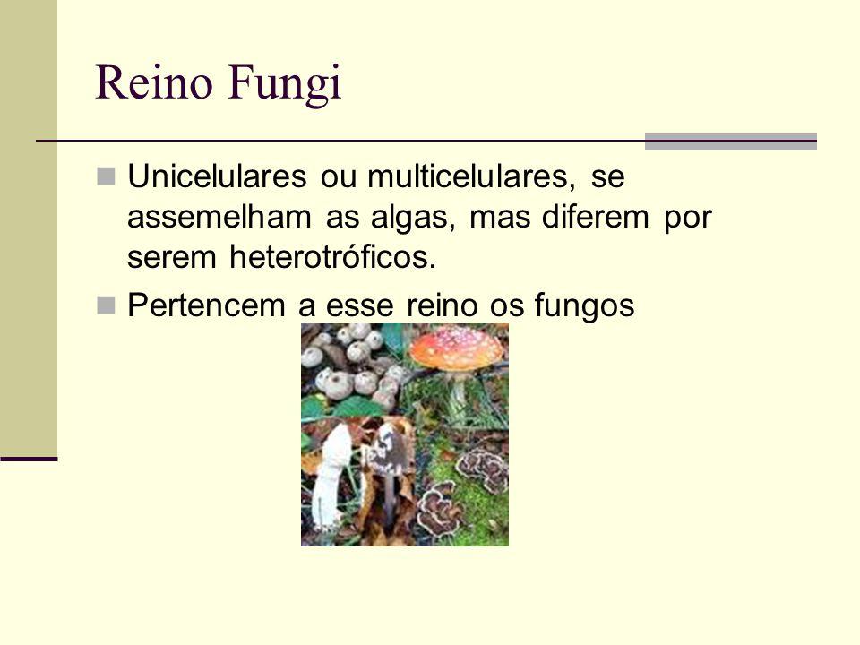 Reino Fungi Unicelulares ou multicelulares, se assemelham as algas, mas diferem por serem heterotróficos.