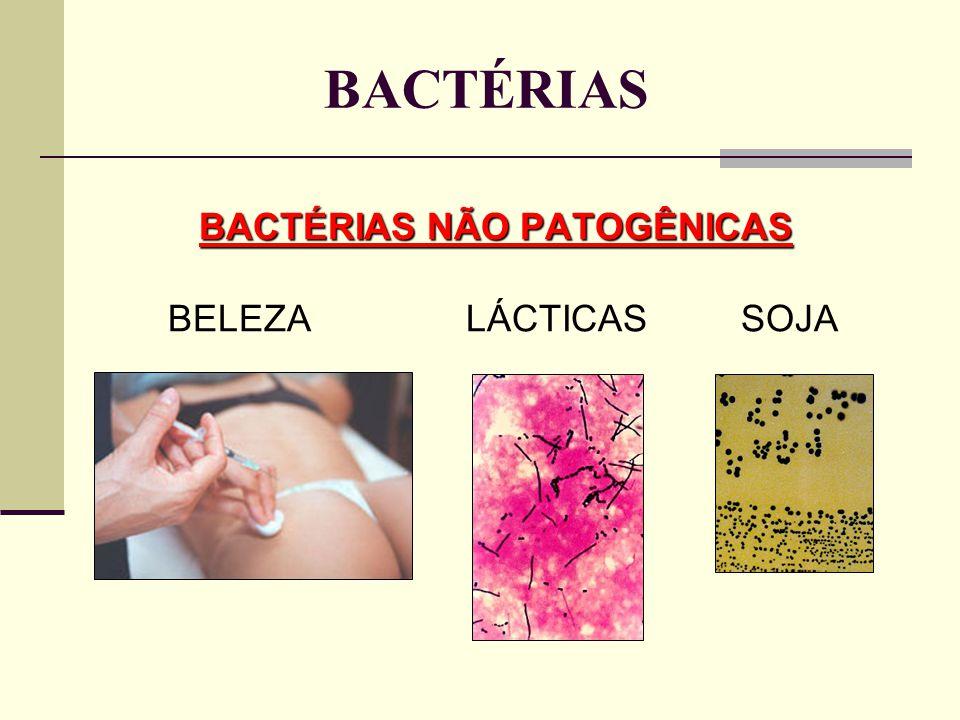 BACTÉRIAS BACTÉRIAS NÃO PATOGÊNICAS BELEZA LÁCTICAS SOJA