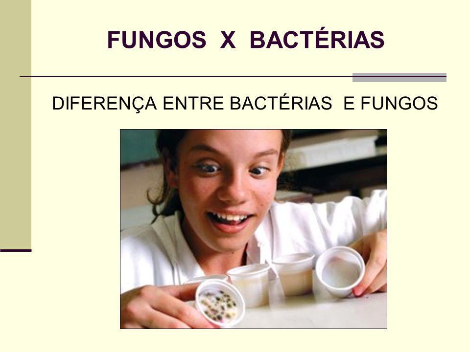 FUNGOS X BACTÉRIAS DIFERENÇA ENTRE BACTÉRIAS E FUNGOS