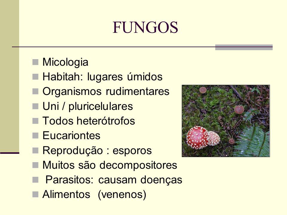 FUNGOS Micologia Habitah: lugares úmidos Organismos rudimentares