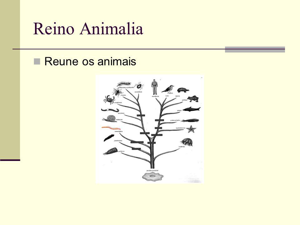Reino Animalia Reune os animais