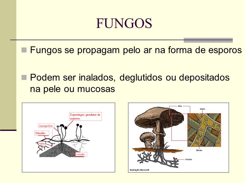 FUNGOS Fungos se propagam pelo ar na forma de esporos