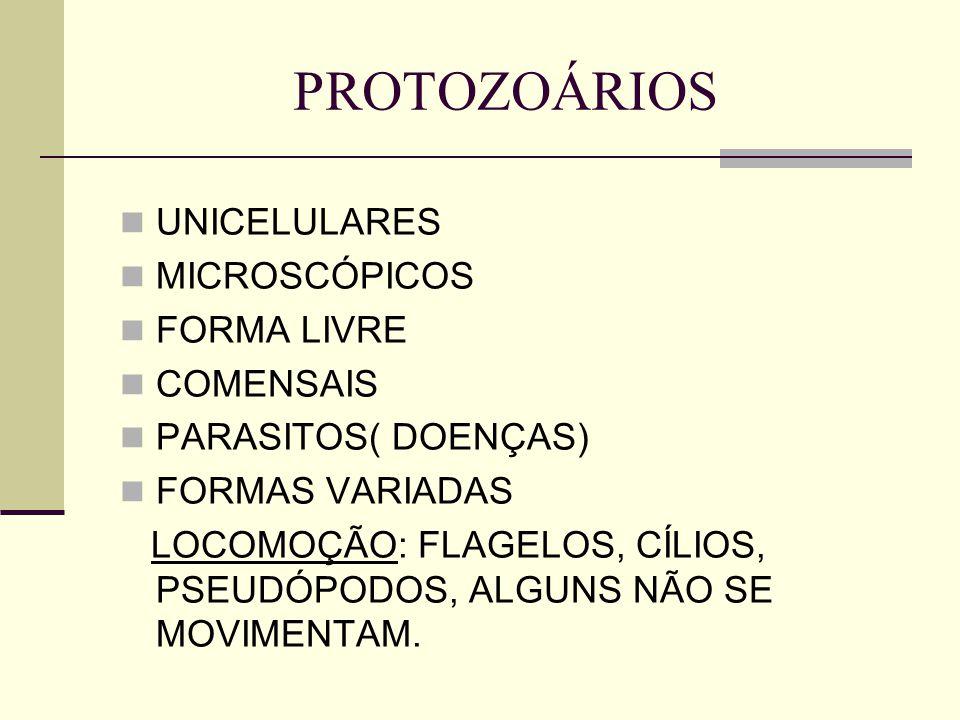 PROTOZOÁRIOS UNICELULARES MICROSCÓPICOS FORMA LIVRE COMENSAIS