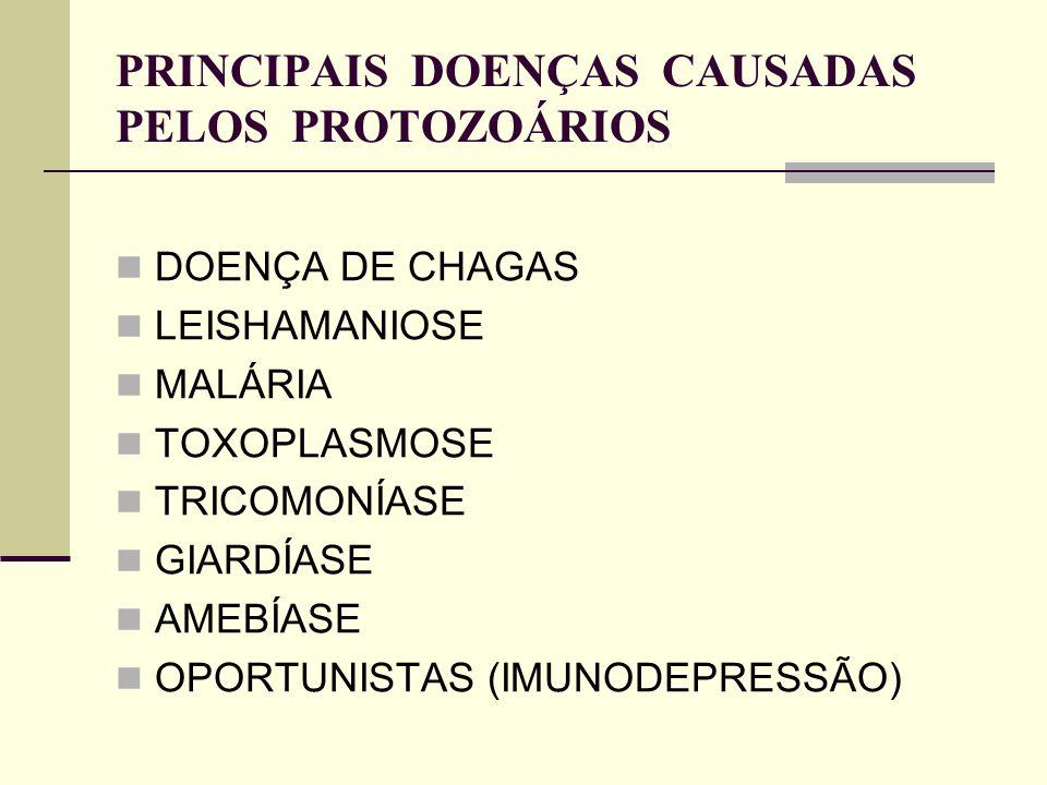 PRINCIPAIS DOENÇAS CAUSADAS PELOS PROTOZOÁRIOS