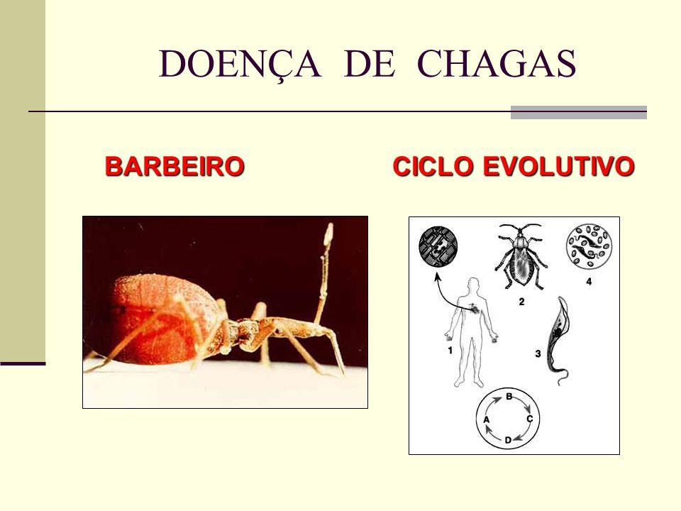 DOENÇA DE CHAGAS BARBEIRO CICLO EVOLUTIVO