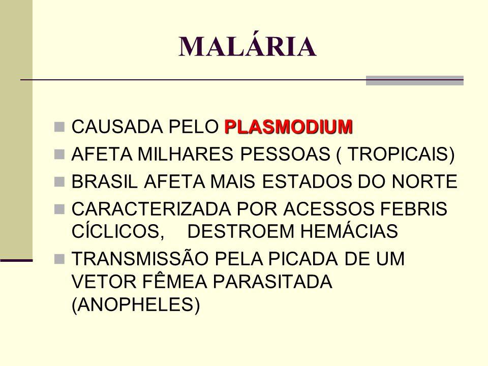 MALÁRIA CAUSADA PELO PLASMODIUM AFETA MILHARES PESSOAS ( TROPICAIS)