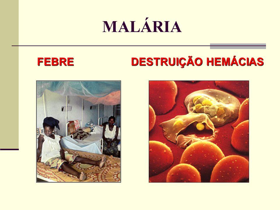 MALÁRIA FEBRE DESTRUIÇÃO HEMÁCIAS