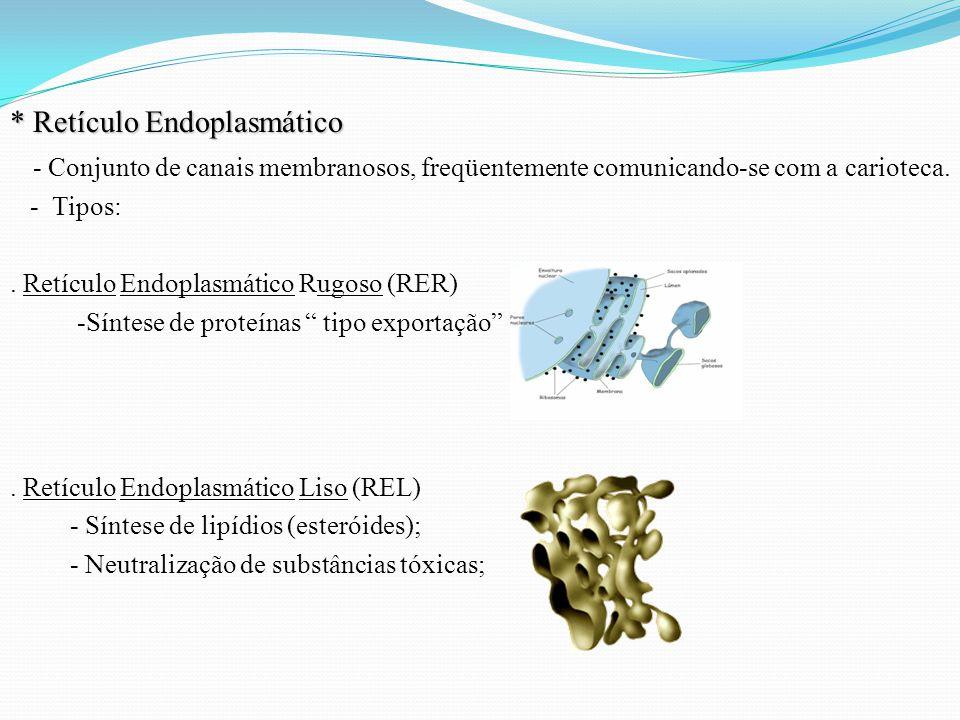 * Retículo Endoplasmático