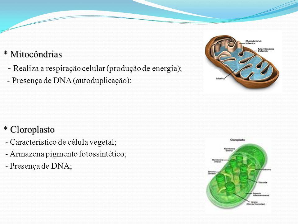 - Realiza a respiração celular (produção de energia);
