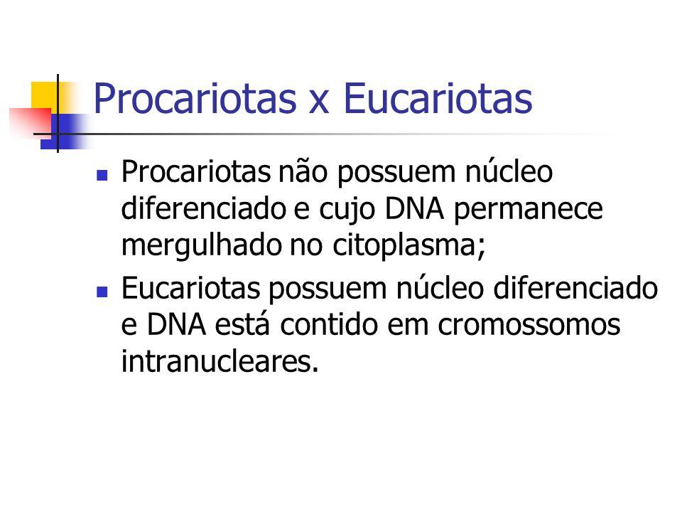 Procariotas x Eucariotas