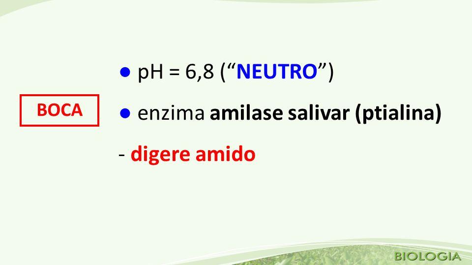 ● enzima amilase salivar (ptialina) - digere amido