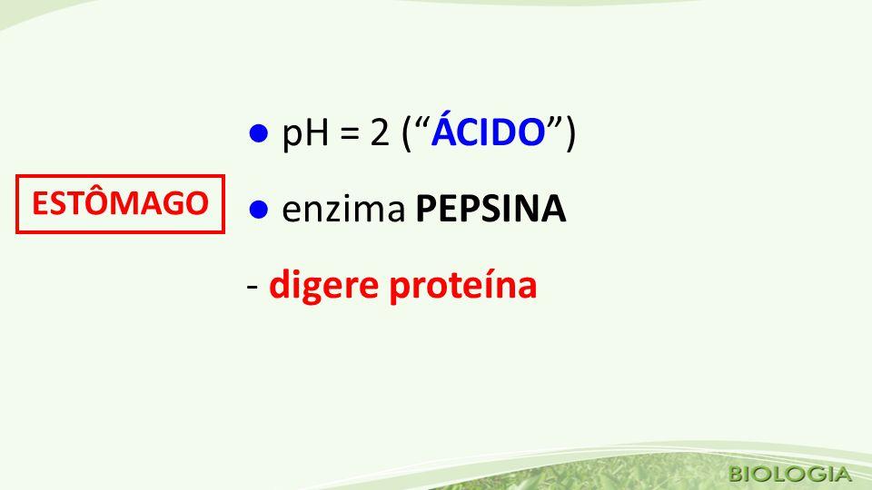 ● pH = 2 ( ÁCIDO ) ● enzima PEPSINA - digere proteína ESTÔMAGO