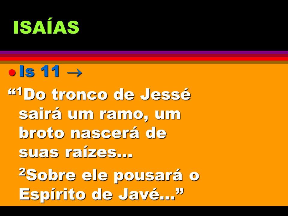 ISAÍAS Is 11  1Do tronco de Jessé sairá um ramo, um broto nascerá de suas raízes...