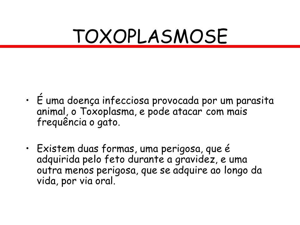 TOXOPLASMOSE É uma doença infecciosa provocada por um parasita animal, o Toxoplasma, e pode atacar com mais frequência o gato.