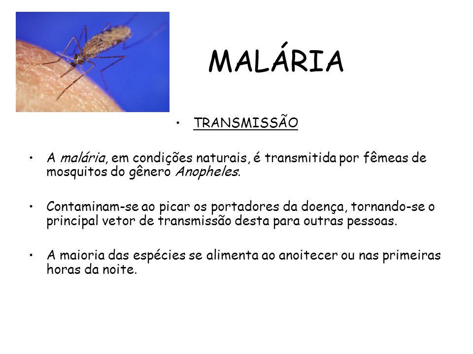 MALÁRIA TRANSMISSÃO. A malária, em condições naturais, é transmitida por fêmeas de mosquitos do gênero Anopheles.