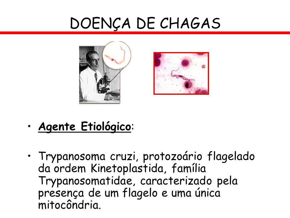 DOENÇA DE CHAGAS Agente Etiológico: