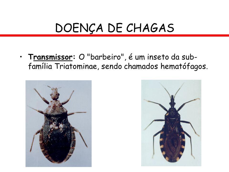 DOENÇA DE CHAGAS Transmissor: O barbeiro , é um inseto da sub-família Triatominae, sendo chamados hematófagos.