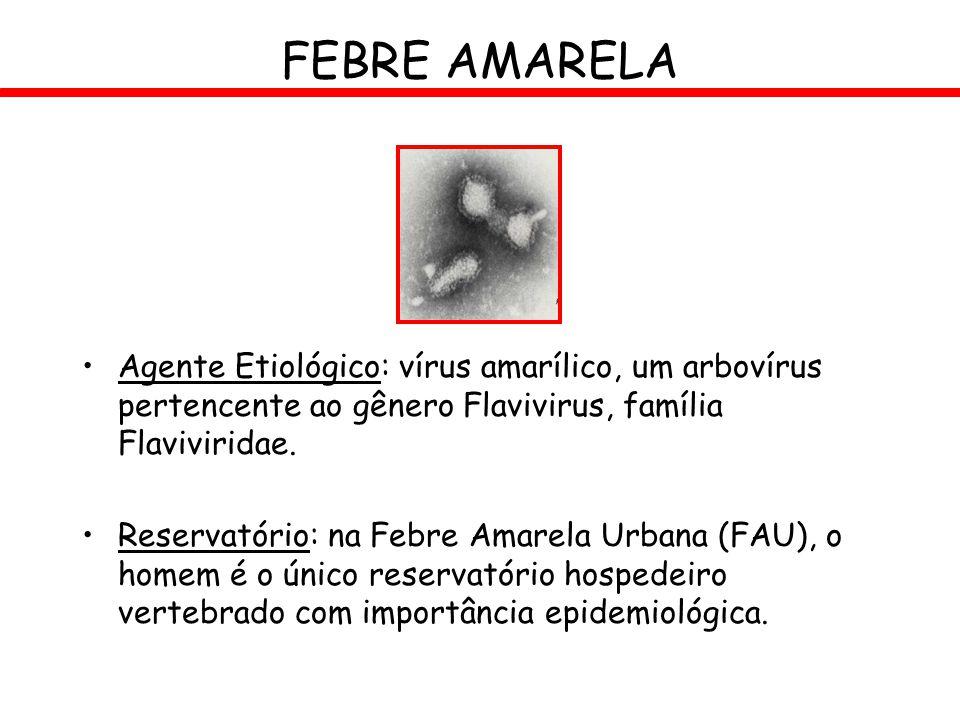 FEBRE AMARELA Agente Etiológico: vírus amarílico, um arbovírus pertencente ao gênero Flavivirus, família Flaviviridae.