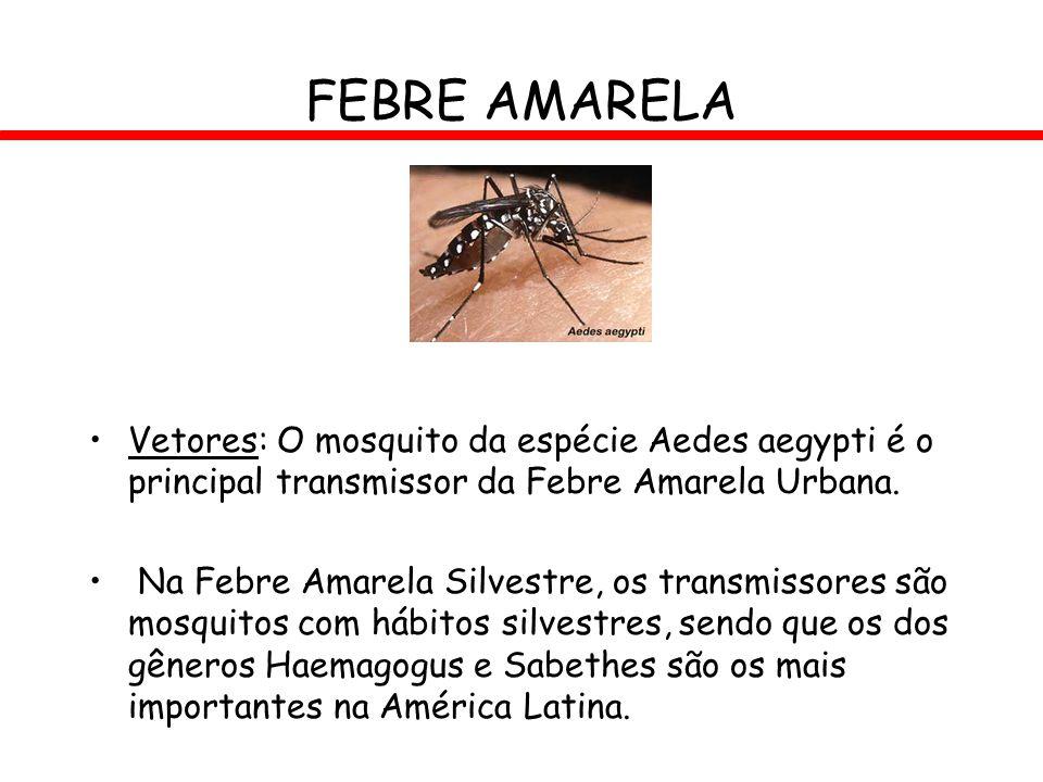FEBRE AMARELA Vetores: O mosquito da espécie Aedes aegypti é o principal transmissor da Febre Amarela Urbana.