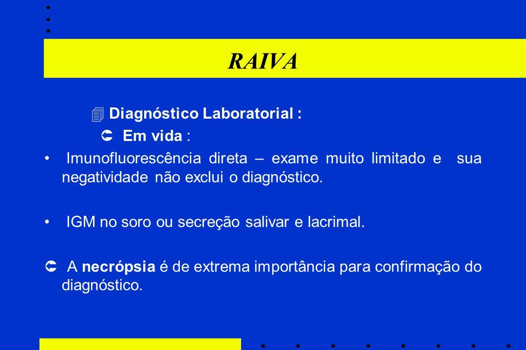 RAIVA  Diagnóstico Laboratorial :  Em vida :