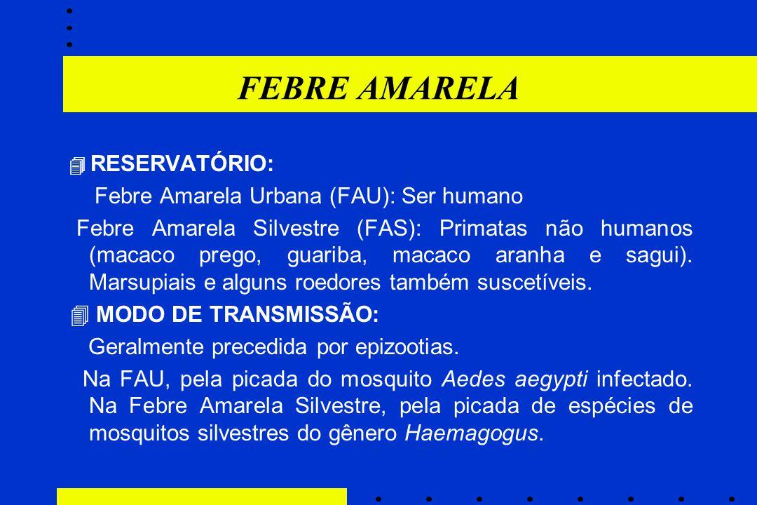 FEBRE AMARELA Febre Amarela Urbana (FAU): Ser humano
