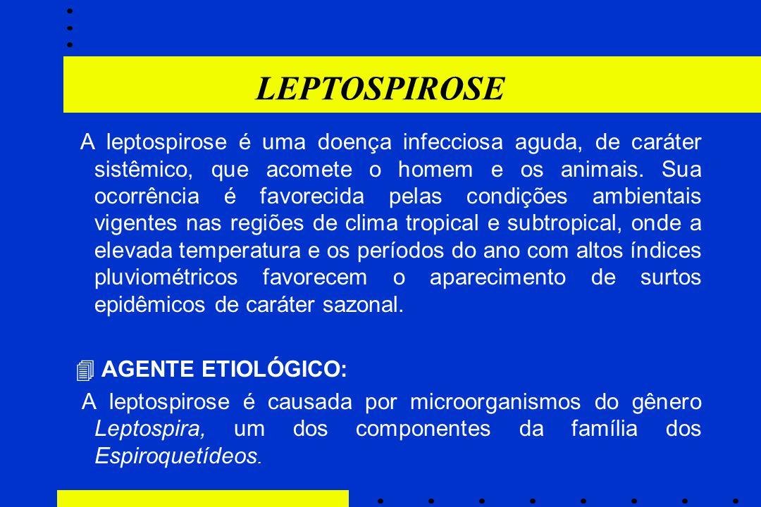 LEPTOSPIROSE  AGENTE ETIOLÓGICO: