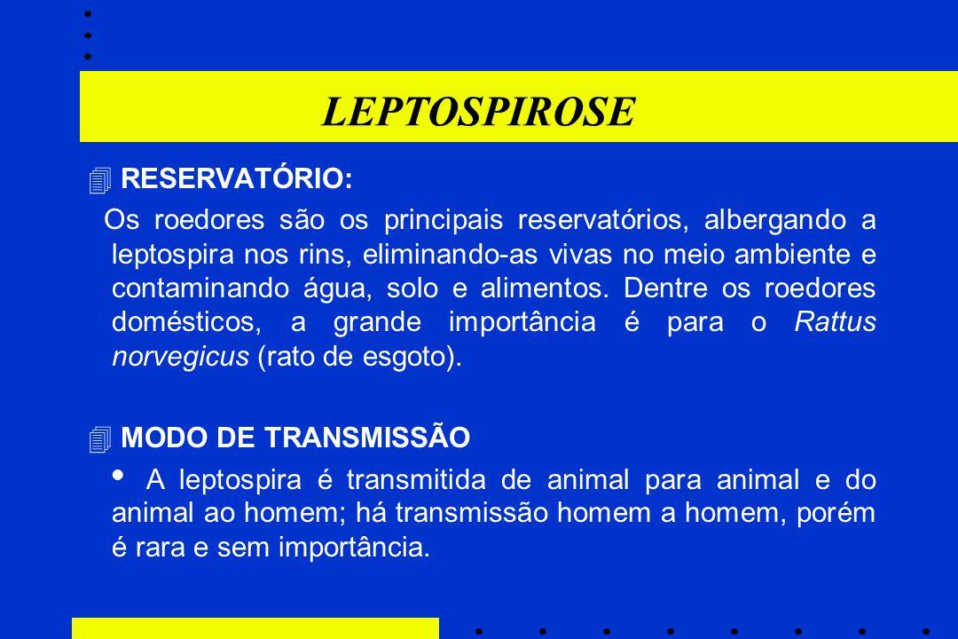 LEPTOSPIROSE  RESERVATÓRIO: