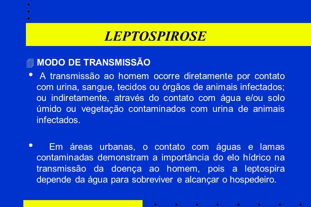 LEPTOSPIROSE  MODO DE TRANSMISSÃO