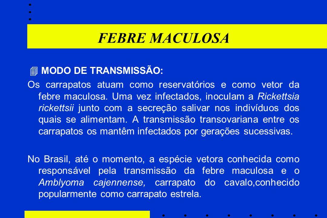 FEBRE MACULOSA  MODO DE TRANSMISSÃO: