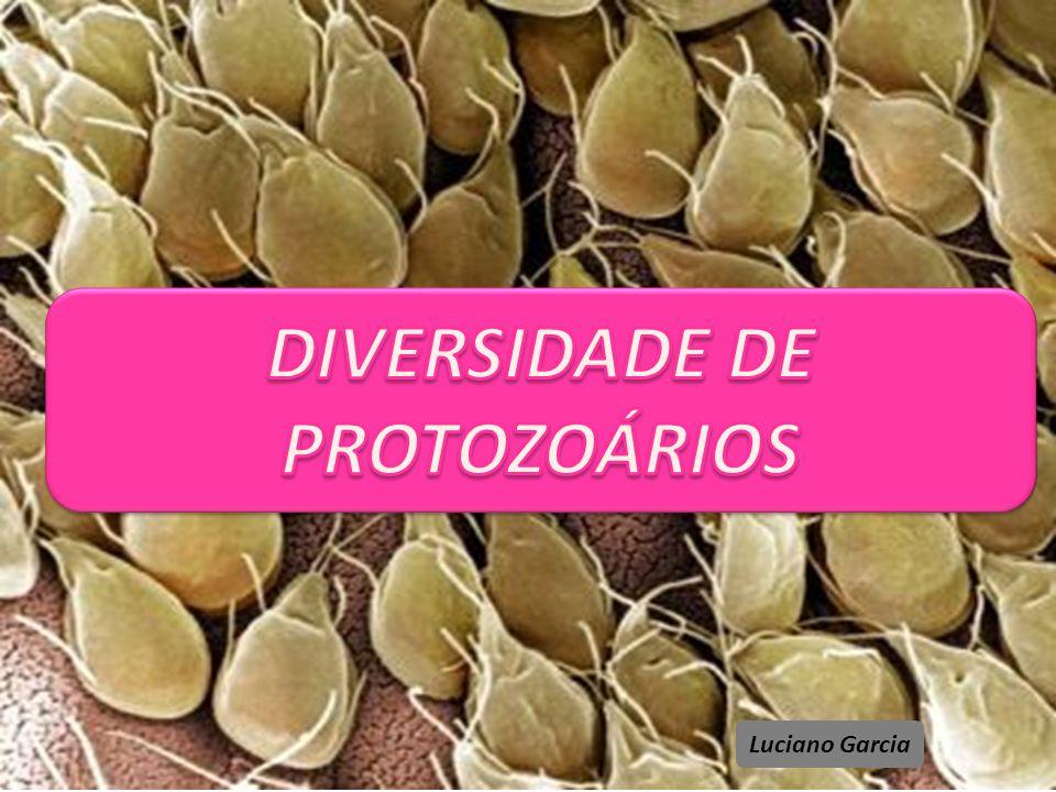 DIVERSIDADE DE PROTOZOÁRIOS