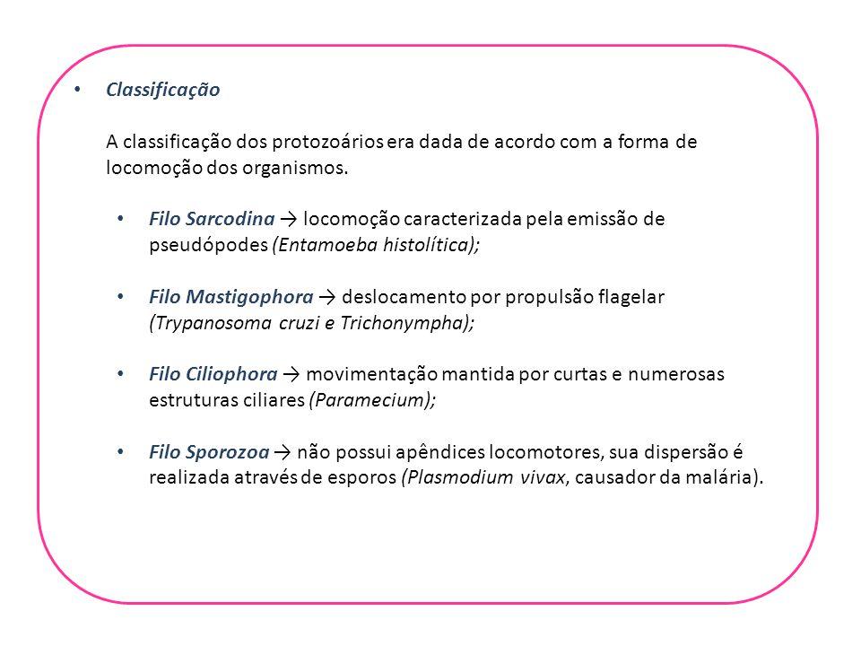 Classificação A classificação dos protozoários era dada de acordo com a forma de locomoção dos organismos.